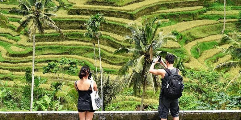 Info Kesehatan Wisata Sawah Akan Hadir Di Utara Jabar